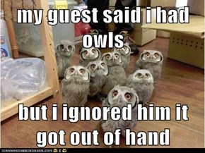my guest said i had owls  but i ignored him it got out of hand