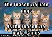The reason we hate dogs  Is the reason we make Gangs