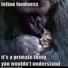 feline fondness