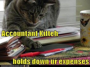 Accountant Kitteh holds down ur expenses