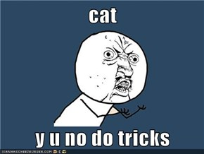 cat  y u no do tricks