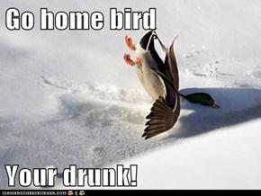 Go home bird  Your drunk!