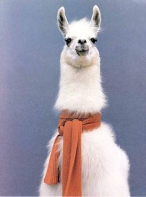 Fancy Llama