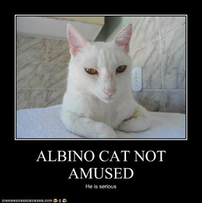 ALBINO CAT NOT AMUSED