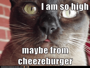 I am so high  maybe from cheezeburger