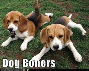Dog Boners