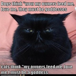 "Dogs think ""wow my owners feed me, love me, they must be goddesses  cats think ""my owners feed me, love me I must be a goddess"