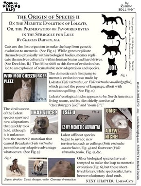 The Evolution of the LOLcat