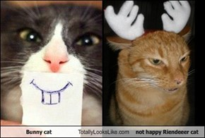 Bunny cat Totally Looks Like not happy Riendeeer cat