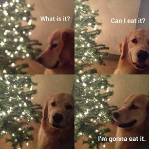 Can I Eat It?