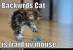 Backwrds Cat  is fraid uv mouse