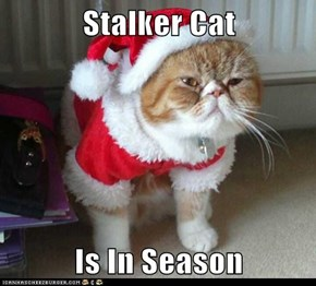 Stalker Cat  Is In Season