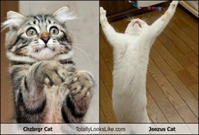 Chzbrgr Cat Totally Looks Like Jeezus Cat
