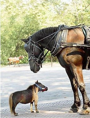 World's Smallest Horse