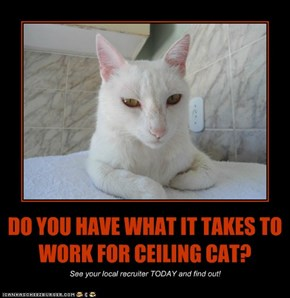 DO YOU HAVE WHAT IT TAKES TO WORK FOR CEILING CAT?