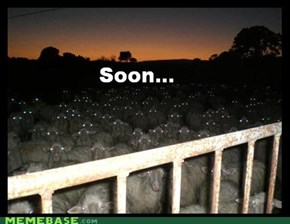 The sheep know...