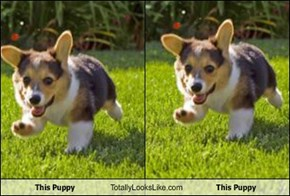 This Puppy Totally Looks Like This Puppy