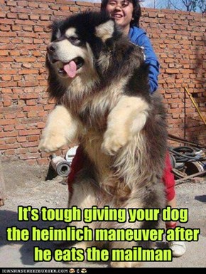 It's tough giving your dog the heimlich maneuver after he eats the mailman