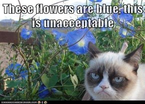 These flowers are blue, this is unacceptable