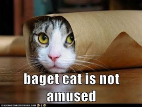 baget cat is not amused