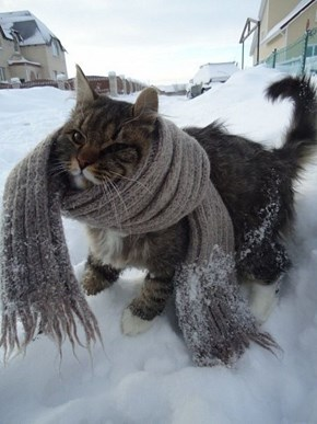 The 25 Days of Catmas: Staying Warm AND Stylish!
