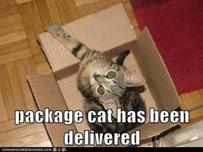 package cat has been delivered