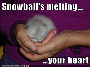 Snowball's melting...  ...your heart