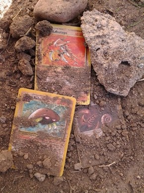 Mysterious Fossils