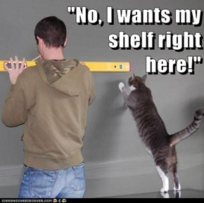 """No, I wants my                                                    shelf right                                                     here!"""