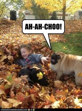 AH-AH-CHOO!