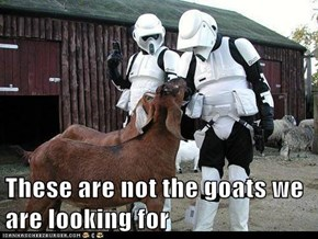 These are not the goats we are looking for