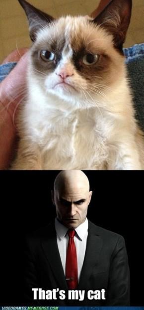 Hitman's cat