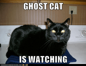 GHOST CAT  IS WATCHING