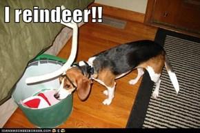 I reindeer!!