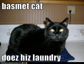 basmet cat  doez hiz laundry