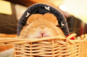 Bunday: Basket Bunny