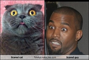 Scared cat Totally Looks Like Scared guy