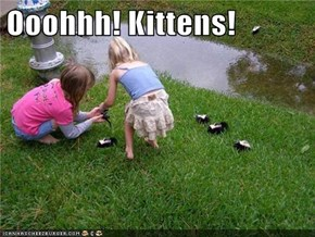 Ooohhh! Kittens!