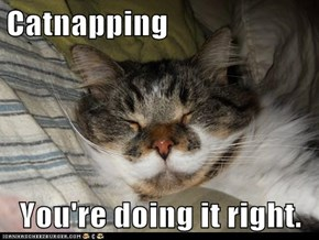 Catnapping  You're doing it right.