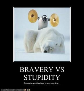 BRAVERY VS STUPIDITY