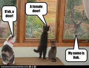 D'oh, a deer!