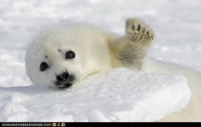 "Seal says ""Hi"""