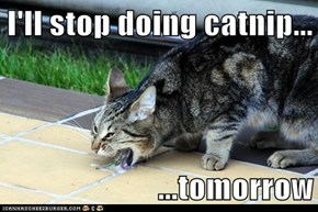 I'll stop doing catnip...  ...tomorrow