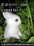 d'awww... you cyoot tew!