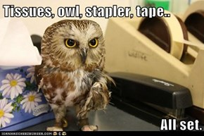Tissues, owl, stapler, tape..  All set.