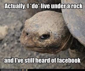 Popups make turtle cranky