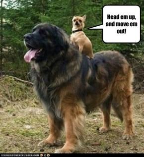 Keep them dogies rollin' RAWHIDE!