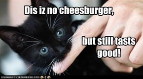 Dis iz no cheesburger,