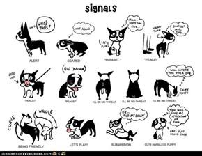 Goggie Signals