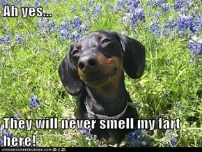 I Has A Hotdog: Aroma-Camouflage